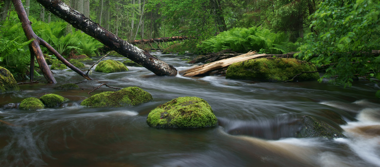 Waldbach (Altja) im Nationalpark Lahemaa in Estland.